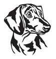 decorative portrait of dog dachshund vector image vector image