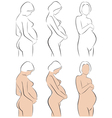 Stylized silhouettes of pregnant women vector image vector image
