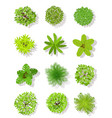 top view tree landscape plan trees with leaves vector image