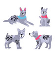 adorable dogs with grey fur and black spots set vector image vector image
