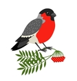 Bullfinch Christmas Bird vector image vector image