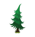 isometric cartoon spruce fir tree - element for vector image vector image