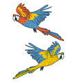 macaw parrots vector image vector image