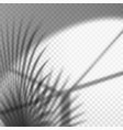 monochrome palm branch reflection on wall vector image