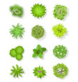top view tree green trees with leaves and bushes vector image vector image