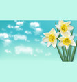 spring card narcissus flowers bouquet and blue sky vector image