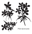 Set of flowers phlox divaricata with leafs Black vector image