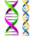 dna strands vector image vector image