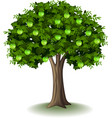green apple on apple tree vector image vector image