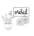 hand drawn sketch orchid flowers in graphic style vector image vector image