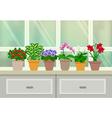 Houseplants Background vector image vector image