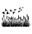 silhouette of duck bird flock flight over marsh vector image