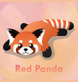 laying cute red panda vector image