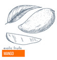 mango hand drawn vector image