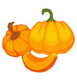 pumpkin pieces and slices whole organic vegetable vector image vector image