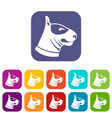 bull terrier dog icons set vector image vector image
