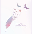 colored feather with flying birds vector image vector image