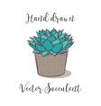 decoration colorful succulent polyphilla in a vector image vector image