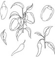 hand drawn vegetable set of bell pepper vector image