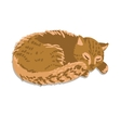 sleeping cat vector image vector image