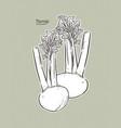 turnip hand draw sketch vector image vector image