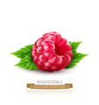 isolated raspberry with green leaves vector image