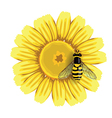 Bee and Sunflower vector image vector image