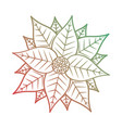 christmas poinsettia flower and leaves decoration vector image vector image