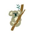 cute koala bear sits on tree and eats leaves vector image