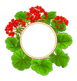 geranium frame vector image vector image