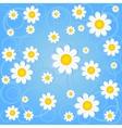 chamomile background vector image