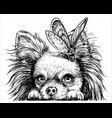 chihuahua dog with a butterfly vector image