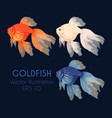 high detailed gold fish vector image vector image