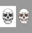 human skulls in engraving vector image