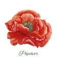 Poppy watercolor painting on white background vector image vector image