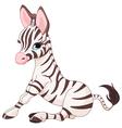 Zebra Foal vector image vector image