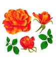 flower orange rose and buds vintage vector image vector image