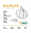 nutrition facts of raw garlic vector image vector image