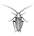cockroach design animal for vector image vector image