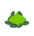 Fresh Romanesco Broccoli Cabbage on White vector image vector image