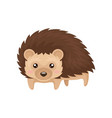 lovely hedgehog prickly animal cartoon character vector image