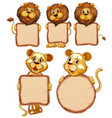 blank sign template with many lions on white vector image vector image