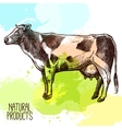 Cow Sketch vector image