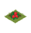 isometric cartoon fruit garden bed with vector image vector image