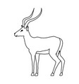 portrait of a standing impala africa mammal wild vector image vector image