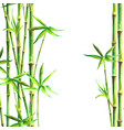 bamboo forest spa watercolor background vector image vector image