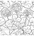 geranium pattern vector image vector image