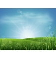 Meadow grass and sky vector image vector image