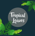 natural label gray background tropical leaves vector image