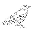drawing crow on white background vector image vector image